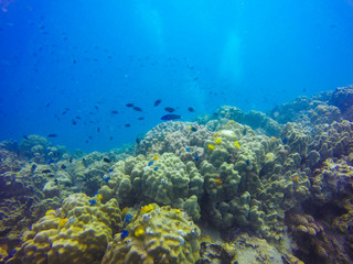 Young coral reef formation on sandy sea bottom. Deep blue sea perspective view with clean water and sunlight. Marine life with animals and plant. Underwater photo of coral reef in blue tropical lagoon