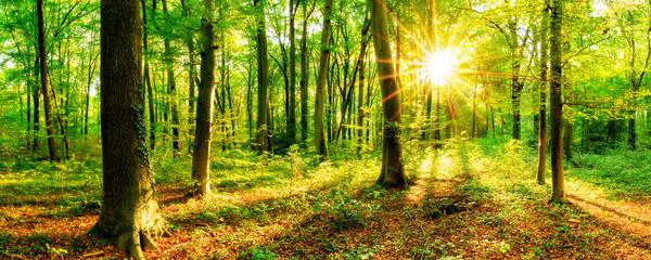 Wald im Frühling mit Sonne
