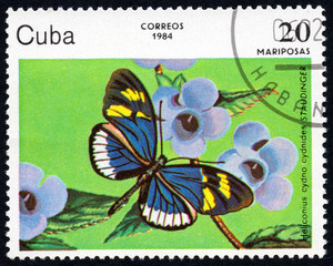 UKRAINE - CIRCA 2017: A stamp printed in Cuba, shows image of a butterfly Heliconius cydno cydnides STAUDINGER close-up, circa 1984