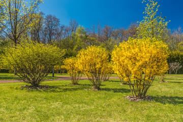Фрагмент весеннего цветущего парка.