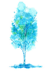 Birch. Forest tree. Watercolor hand drawn illustration.