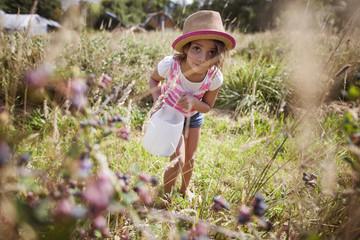 Girl (6-7) picking up blueberries