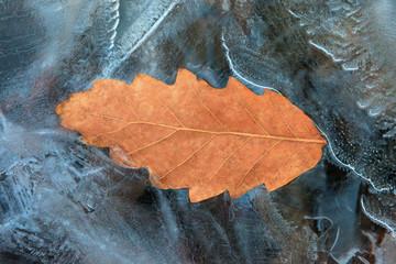 Oak leaf frozen in ice. Winter theme. Winter wallpaper with ice and oak leaf. Icy weather symbolic background. Cold weather winter theme. Oak leaf in frozen splash.