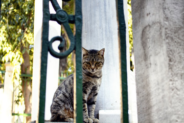 Beautiful tabby / striped stray cat. It's Galata area of Beyoglu district in Istanbul