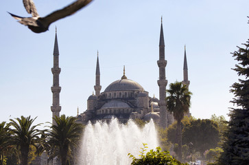 Pigeon flies in blurry motion towards Blue (Sultanahmet) Mosque with trees and water fountain in foreground. Well-known site built in 1616 & containing its founder's tomb.