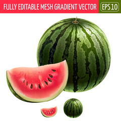Watermelon on white background. Vector illustration
