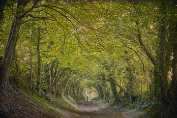 Halnaker ancient green lane in West Sussex in autumn with walker and dogs