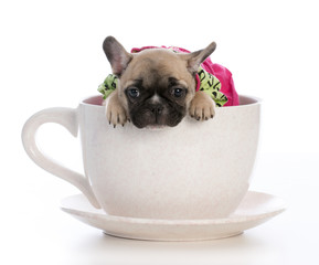 cute puppy sitting inside a teacup on white background