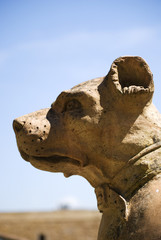 The dog's head, detail of sculpture in Boboli gardens