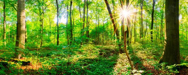 Wald im Frühling bei Sonnenschein