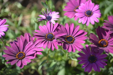 Pretty Purple Daisy Flowers Floral Bouquet