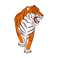Angry tiger.  Vector illustration isolated on white background.