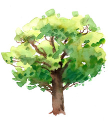 Watercolor oak tree