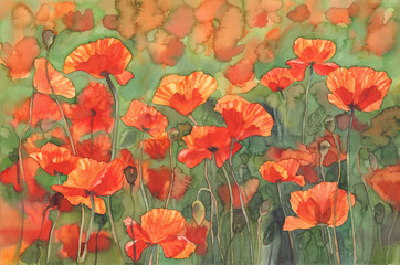 poppies sunny field watercolor background