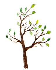 Watercolor tree with green leaves isolated on white background