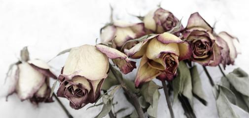 rosen verblüht konzept