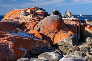 Lichen covered rocks, Bay of Fires, Tasmania, Australia
