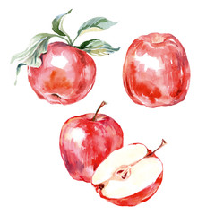 Watercolor hand drawn red apple. Isolated eco natural food fruit illustration on white background. Vector