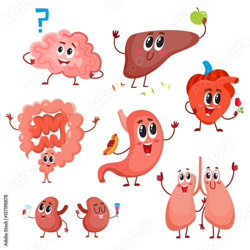 set of cute and funny healthy human organ characters heart lungs