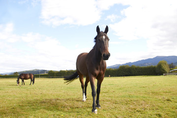 Horse walking towards camera