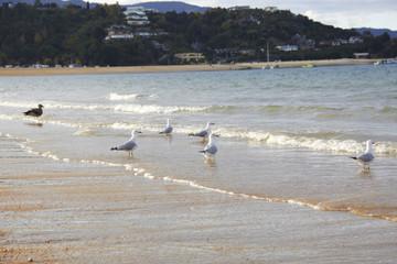 Five black billed gull & shore bird on the beach