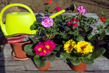 Colorful flower pots and gardening tools in the spring