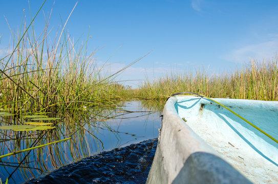 Cruising trough green reeds in a kayak under blue sky in the Okavango Delta in Botswana