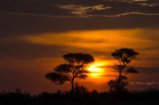Beautiful sunset in the African savanna. The orange glowing sun is setting between two trees under a cloudy sky