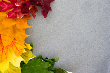 Multi-colored maple leaves on a gray fabric left.