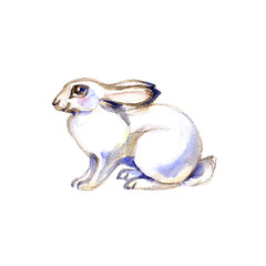 Watercolor rabbit sitting. May be used for Easter design