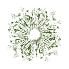 Vector circle background with wild meadow flowers, herbs and grasses.