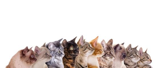 Reihe verschiedene Katzenköpfe Fototapete