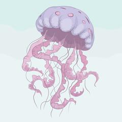 Jellyfish Hand drawn illustration