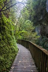 Wooden Bridge in  Waitomo, New Zealand.