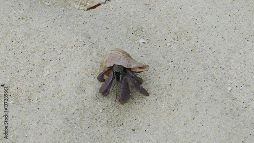 """""""hermit crab crawling on white sand, 4k """" Stock footage ..."""