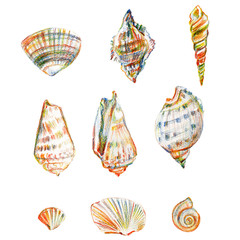 Colored seashell isolated on white background, hand drawn illustration various shells drawing chromatic pencils, collection underwater artistic marine element design for greeting card, restaurant menu