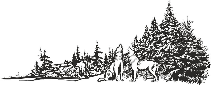 Howling wolves/Vector image of two wolves howling in the background of a winter forest.