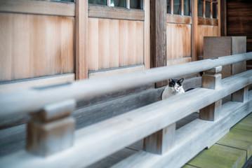 Cat outside Japanese Shrine