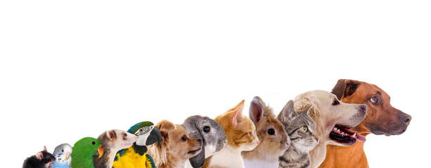 Reihe unterschiedliche Haustiere – Köpfe im Profil