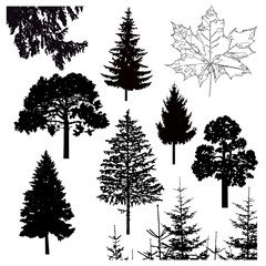 Image silhouette of different trees. Can be used as poster, badge, emblem, banner, icon, sign.