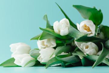 Bunch of white tulips lay on plain aquamarine background