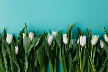 White tulips lay in row on plain background