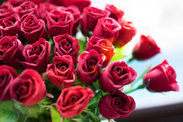 Red roses on Valentine's Day.