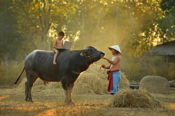 Child and father using notebook on buffalo at during sunset,Thailand culture,Thailand