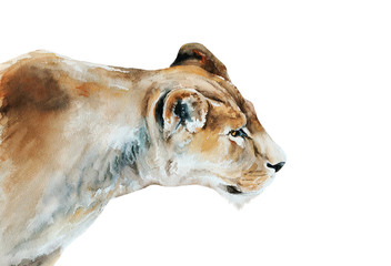 lioness watercolor painting