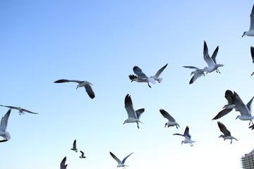 miami beach seagulls