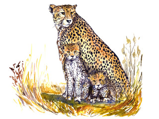 Cheetah with kittens sitting camouflaged in the grass in the African savanna and looking forward, isolated hand painted watercolor illustration