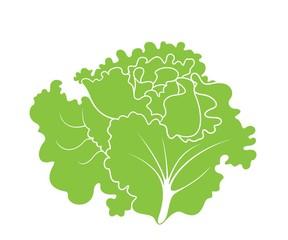Lettuce. Leaf Salad.