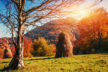 mountain range in the Carpathian Mountains in the autumn season