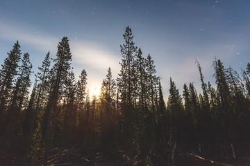 Bright moonlight shining between tall trees